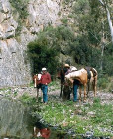 Yarramba Horse Riding - Taree Accommodation