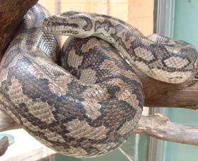 Armadale Reptile Centre - Taree Accommodation