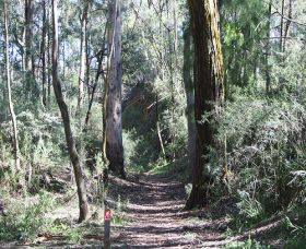 Box Vale Mine Walking Track and Lookout - Taree Accommodation