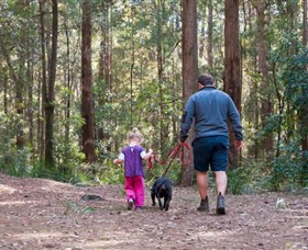 Olney State Forest - Watagan Mountains - Taree Accommodation