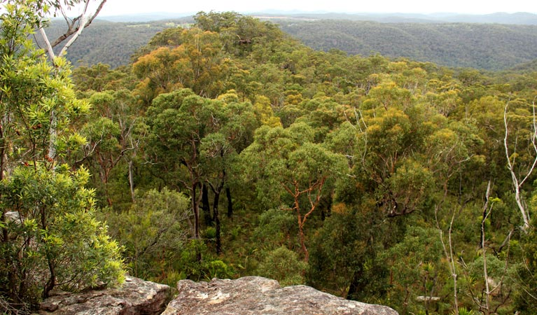 Mount Olive lookout - Taree Accommodation