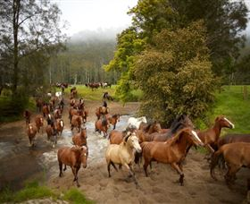 Glenworth Valley Horse Riding - Taree Accommodation