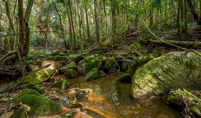 Palm Grove Nature Reserve - Taree Accommodation