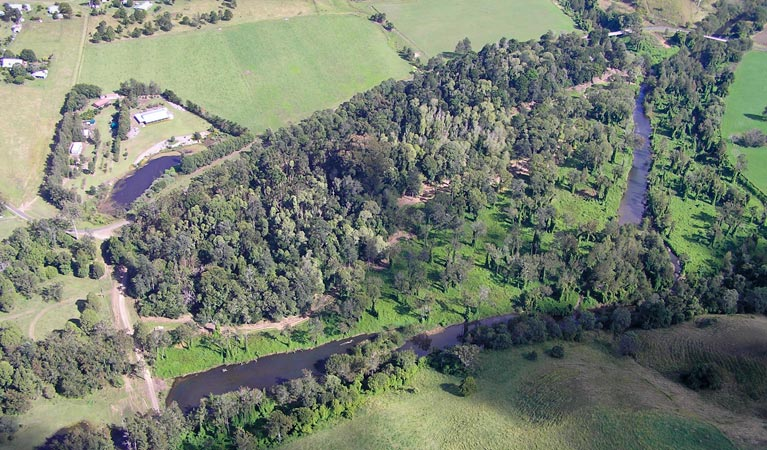 Moore Park Nature Reserve - Taree Accommodation