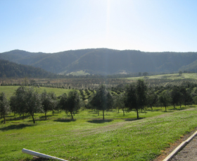 Hastings Valley Olives - Taree Accommodation