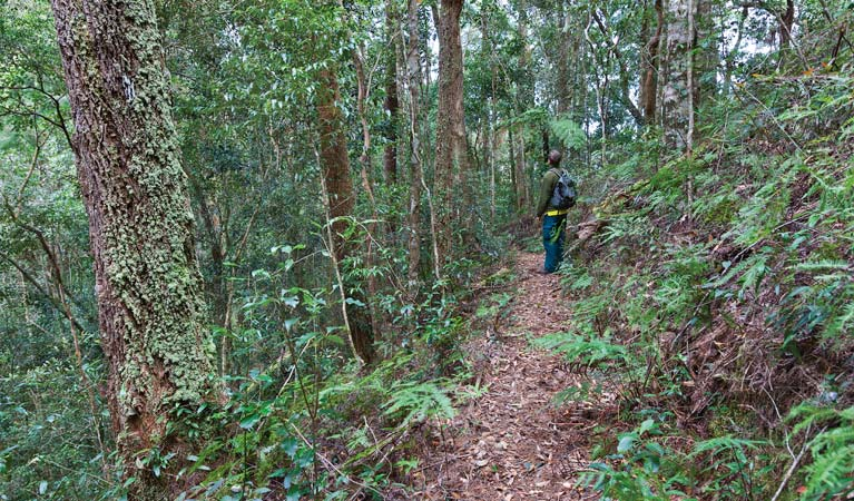 Blackbutt walking track - Taree Accommodation