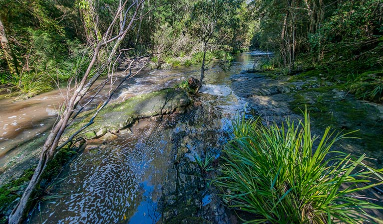 Dawson River walking track - Taree Accommodation