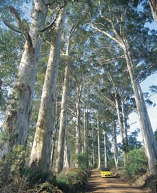The Great Forest Trees Drive - Taree Accommodation