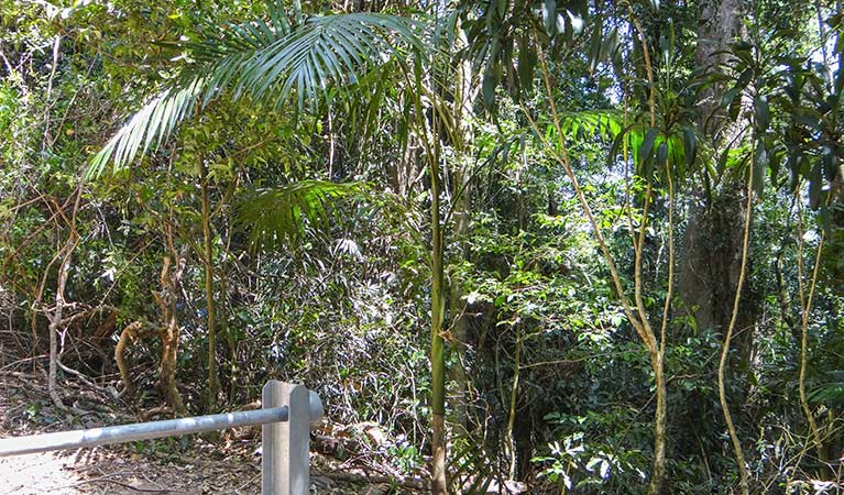 Goorgana walking track - Taree Accommodation