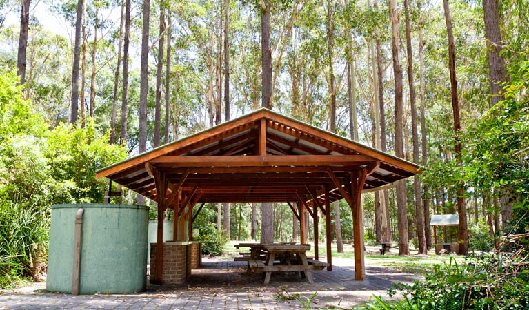 Bongil picnic area - Taree Accommodation