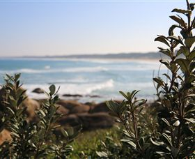 Cape Conran Nature Trail - Taree Accommodation