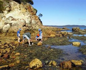 Sapphire Coast Marine Discovery Centre - Taree Accommodation