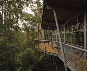 Tarkine Forest Adventures - Dismal Swamp - Taree Accommodation