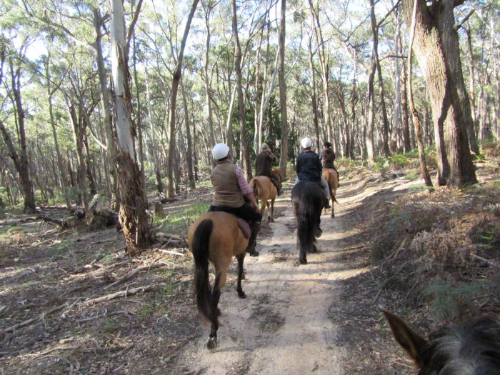 Silver Brumby Trails - Taree Accommodation