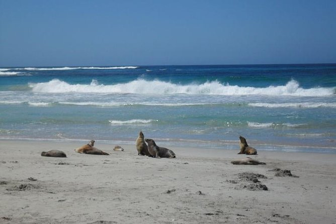 Kangaroo Island in a Day Tour from Adelaide - Taree Accommodation