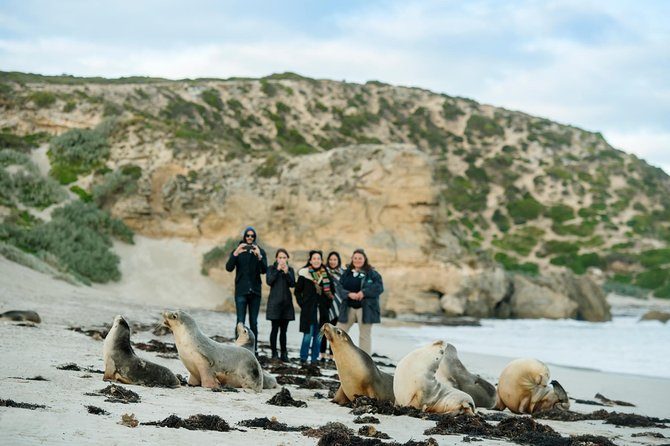 Small-Group Kangaroo Island 4WD Tour from Adelaide - Taree Accommodation