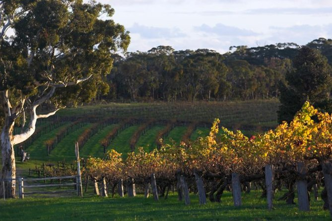 Barossa Valley with Hahndorf Tour from Adelaide - Taree Accommodation