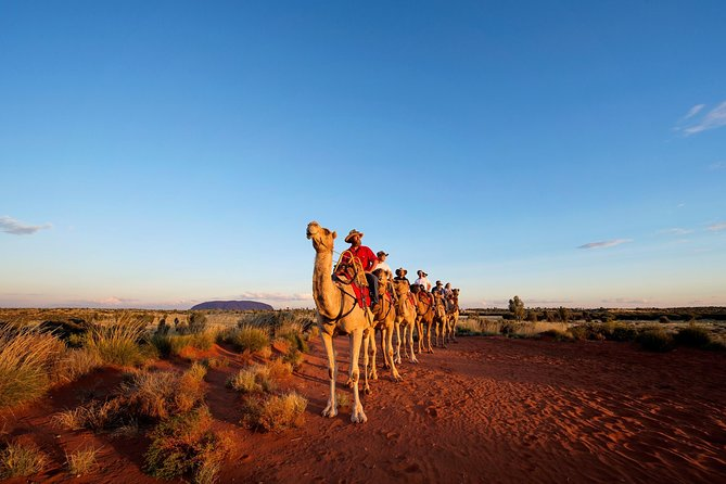 Uluru Camel Express Sunrise or Sunset Tours - Taree Accommodation
