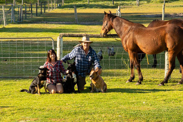 Meet The Animals - Taree Accommodation