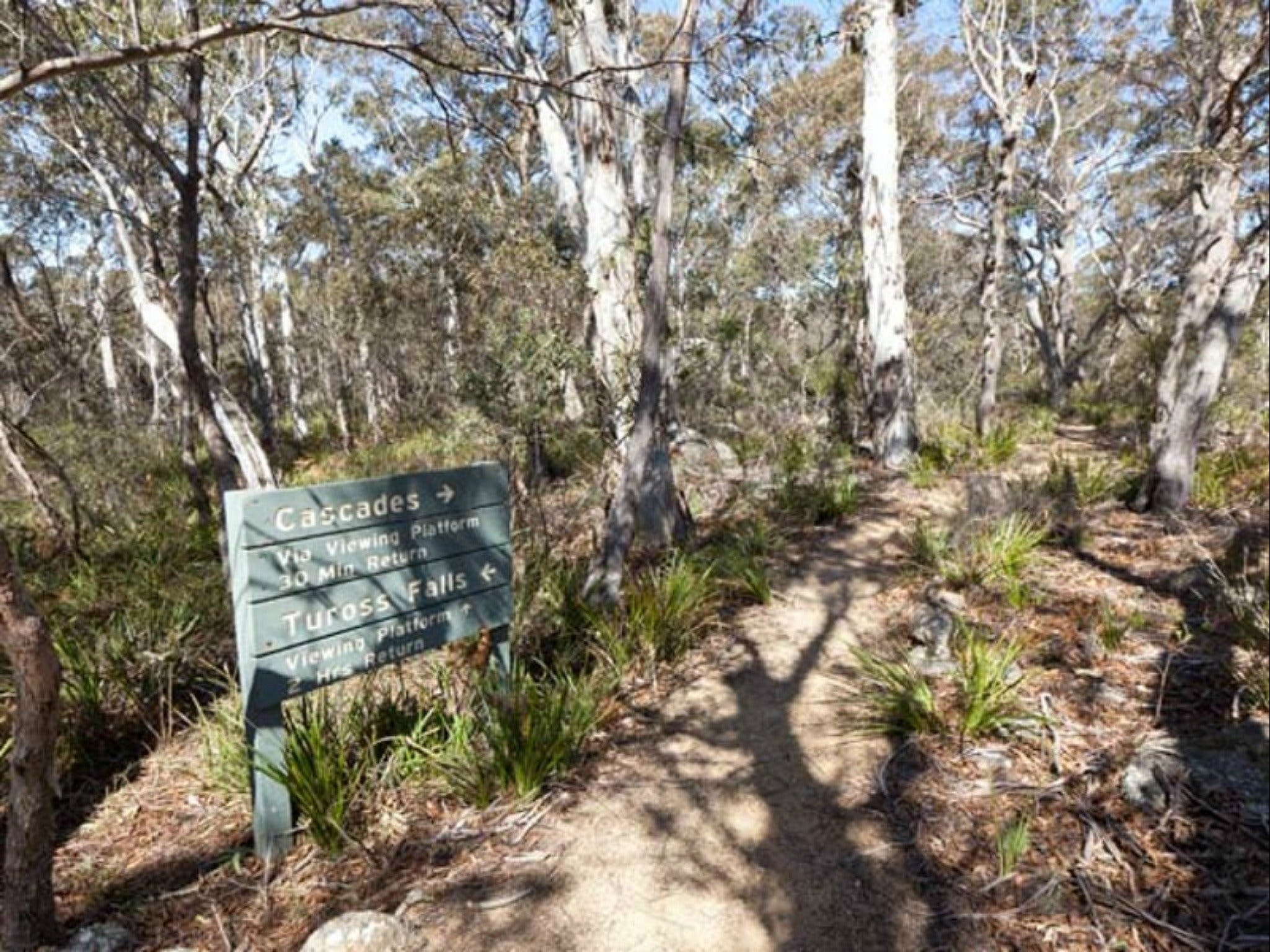 Cascades walking track and viewing platform - Taree Accommodation