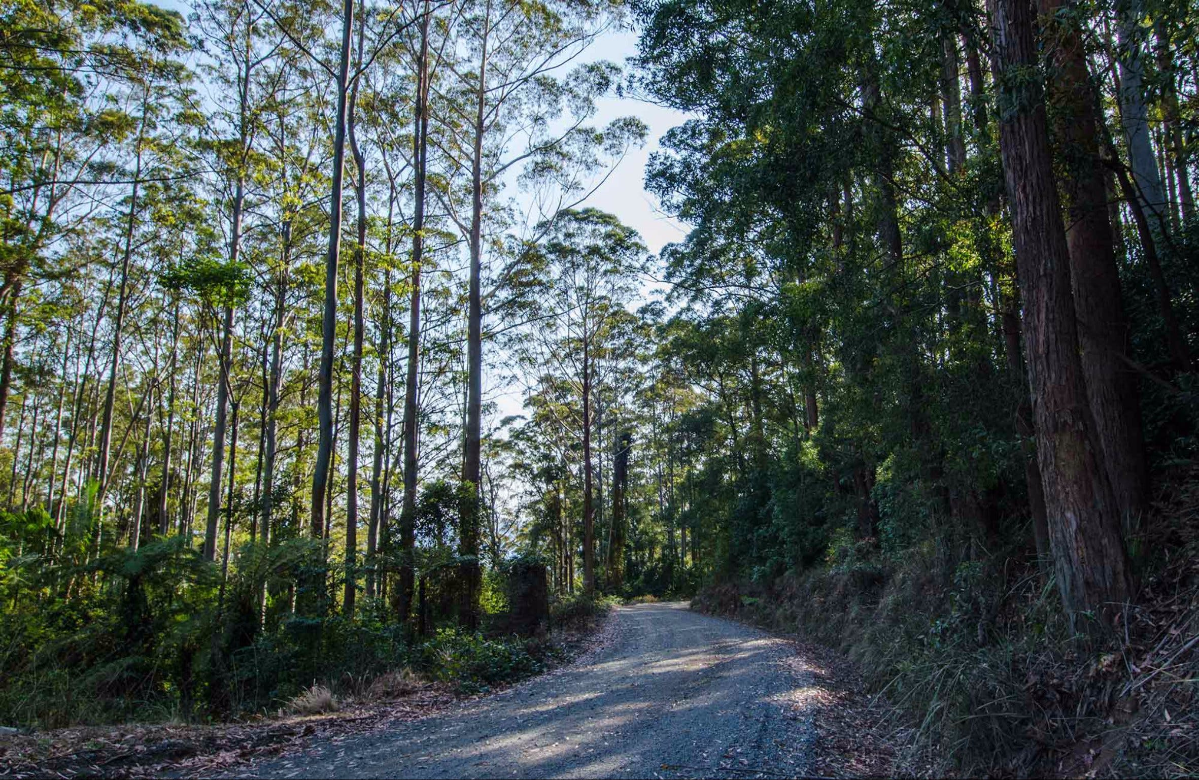 Hastings Forest Way Touring Route - Taree Accommodation