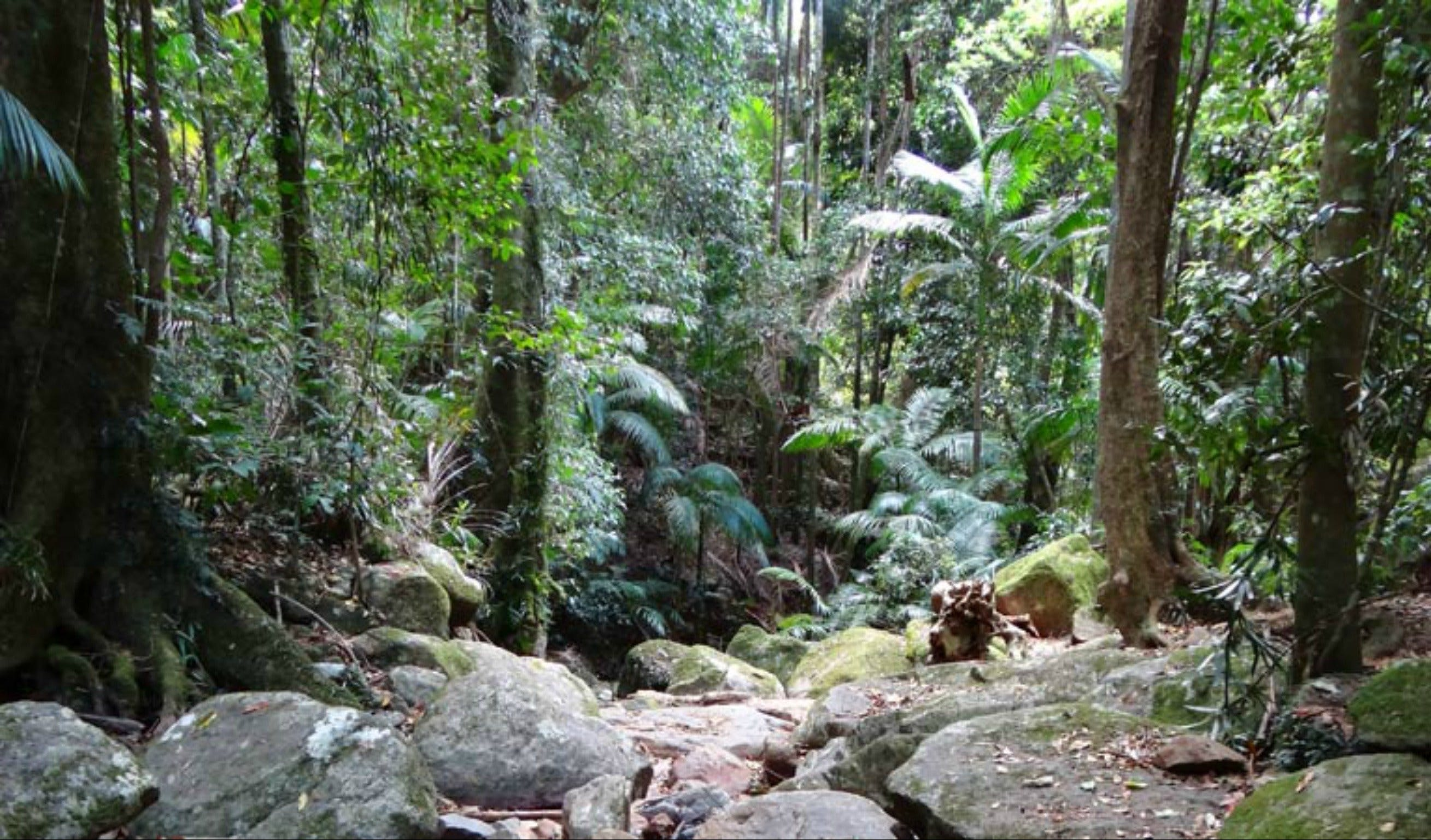 Lyrebird track - Taree Accommodation