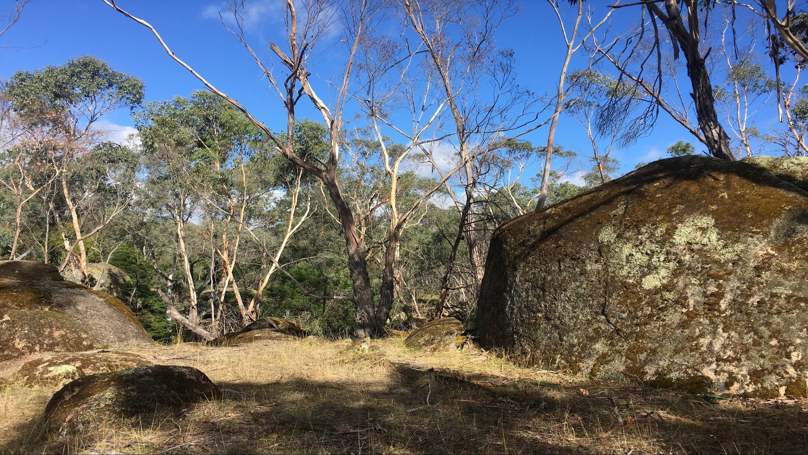 Bailey's Rocks - Dergholm State Park - Taree Accommodation