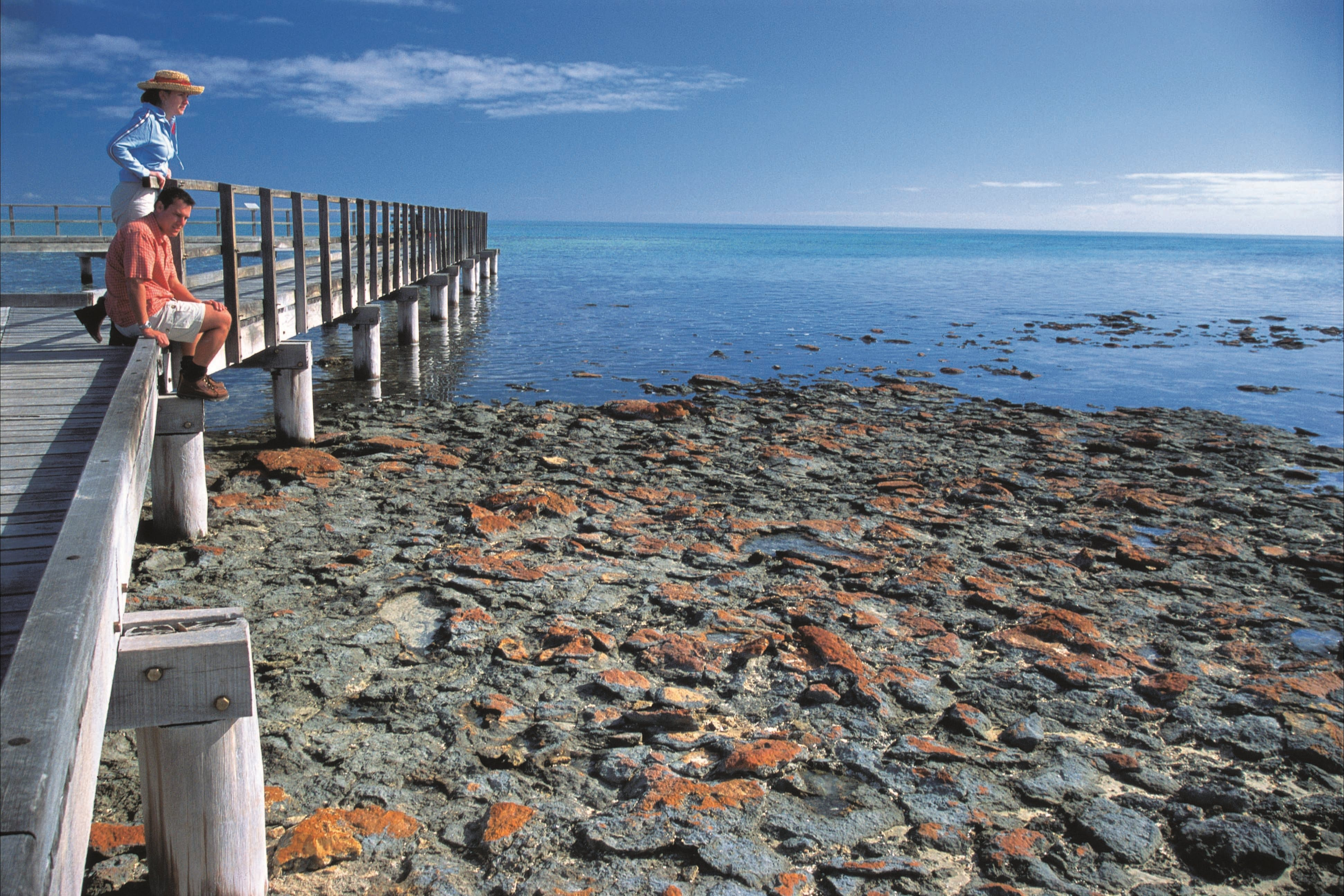 Hamelin Pool Stromatolites - Taree Accommodation