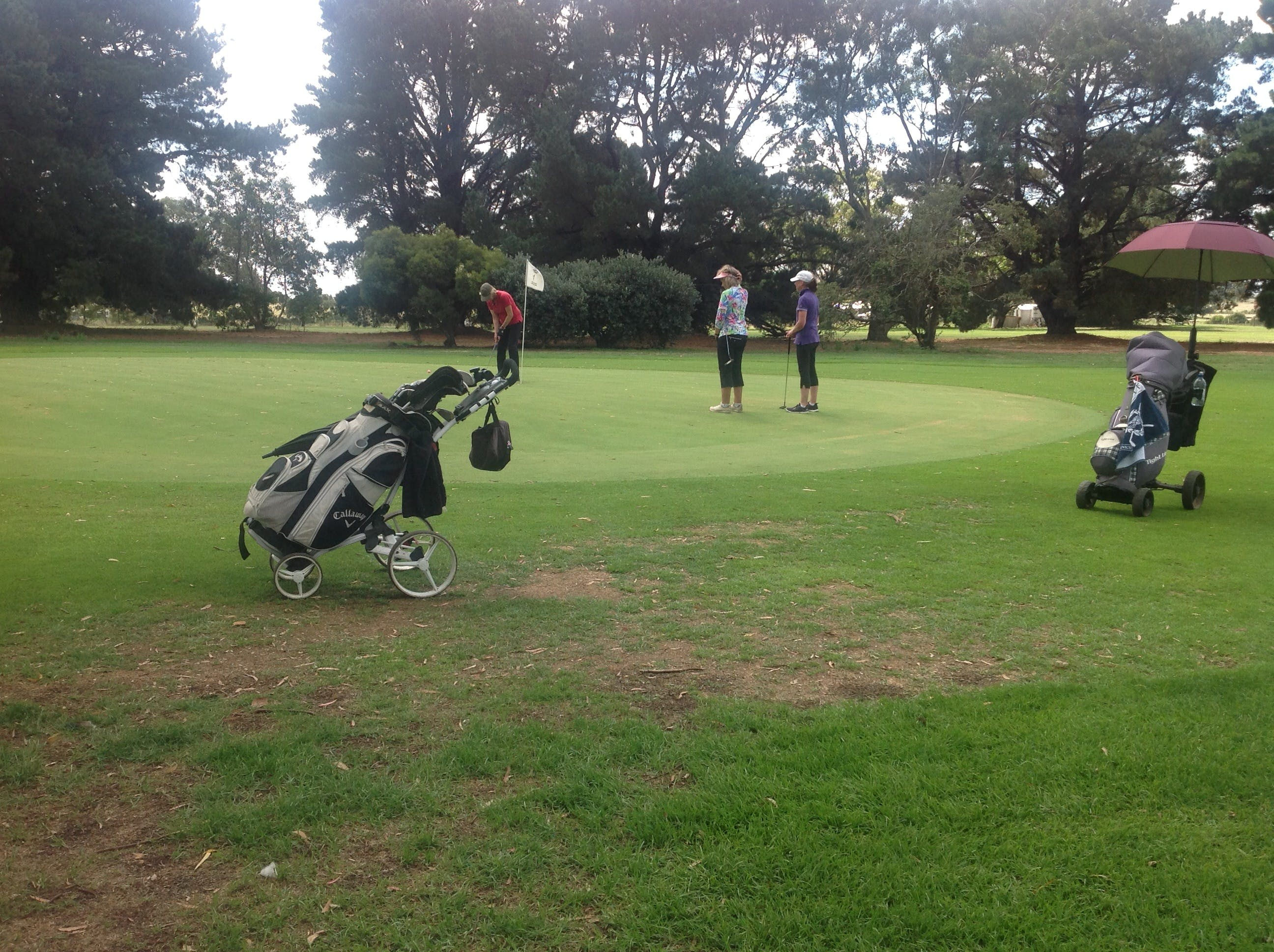 Mortlake Golf Club - Taree Accommodation
