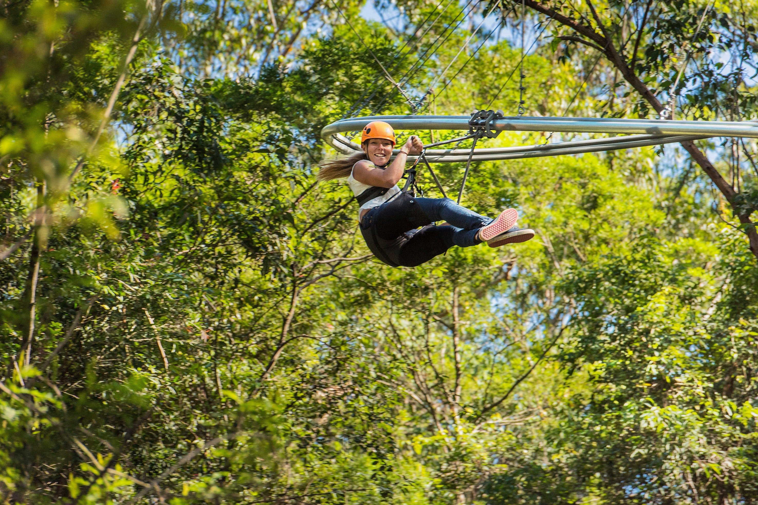 TreeTop Crazy Rider - Taree Accommodation