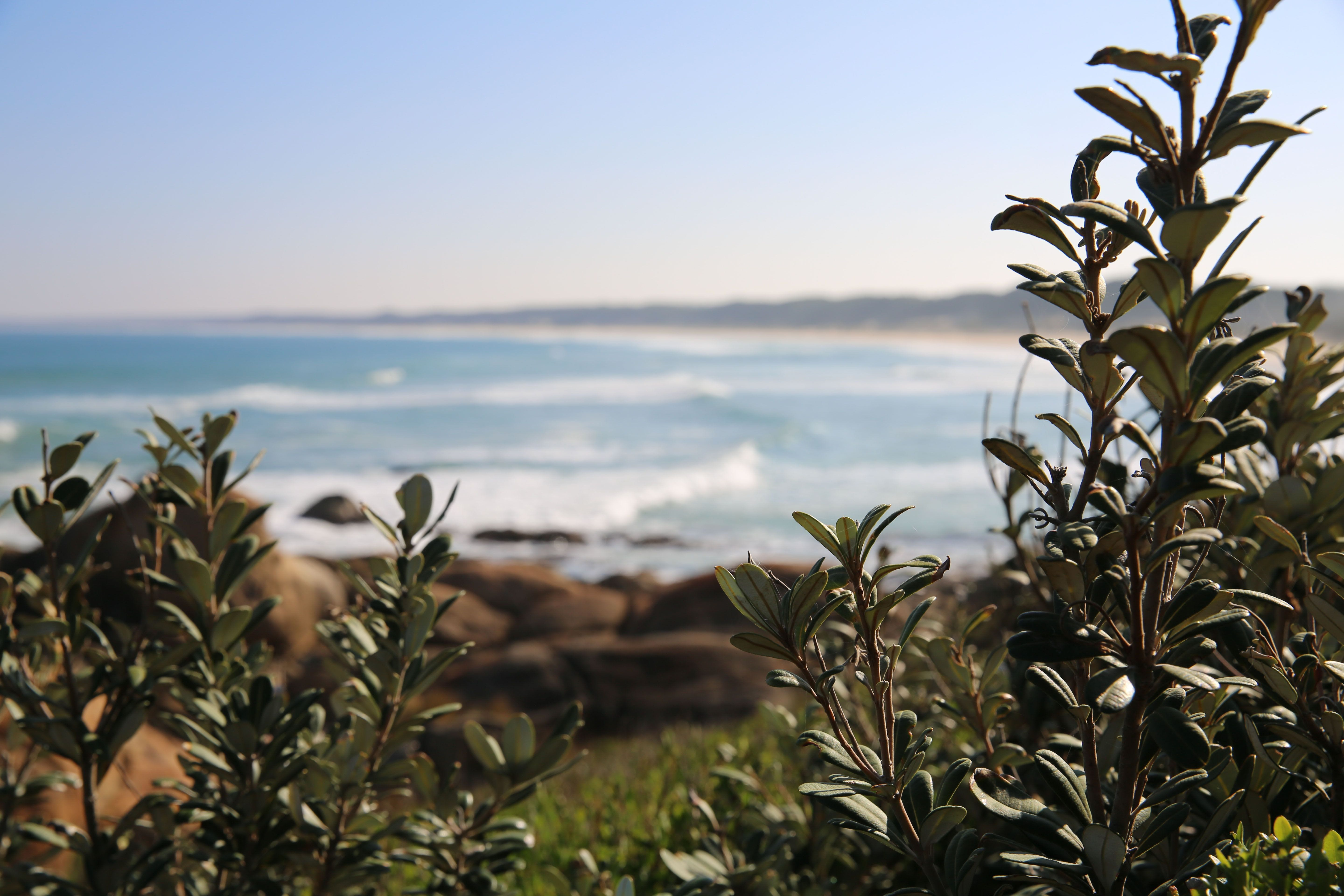 Cape Conran Coastal Park - Taree Accommodation