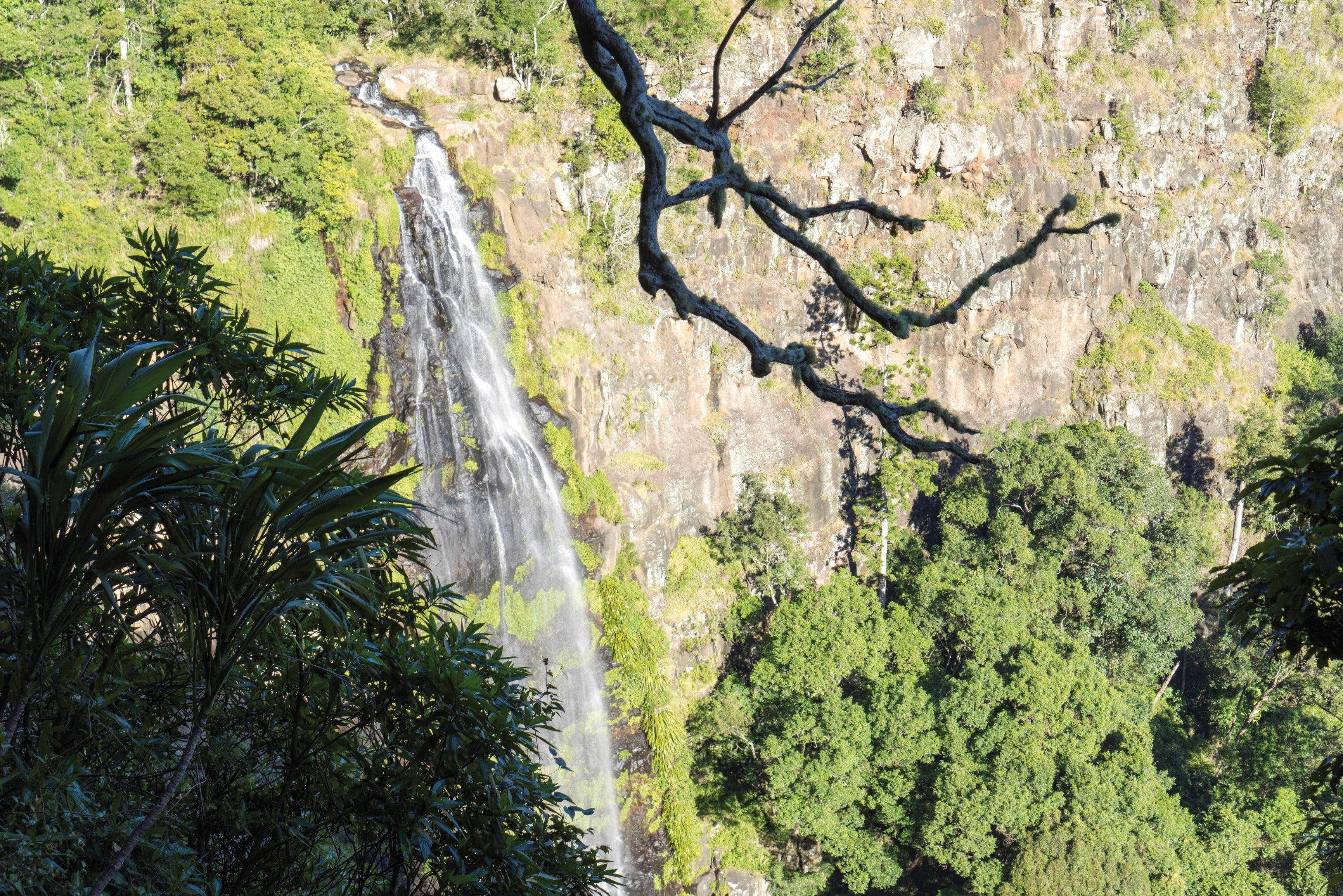 Morans Falls track Lamington National Park - Taree Accommodation