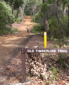 Old Timberline and Sidings Rail Trails - Taree Accommodation