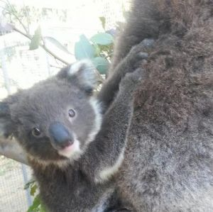 West Oz Wildlife Petting Zoos - Taree Accommodation