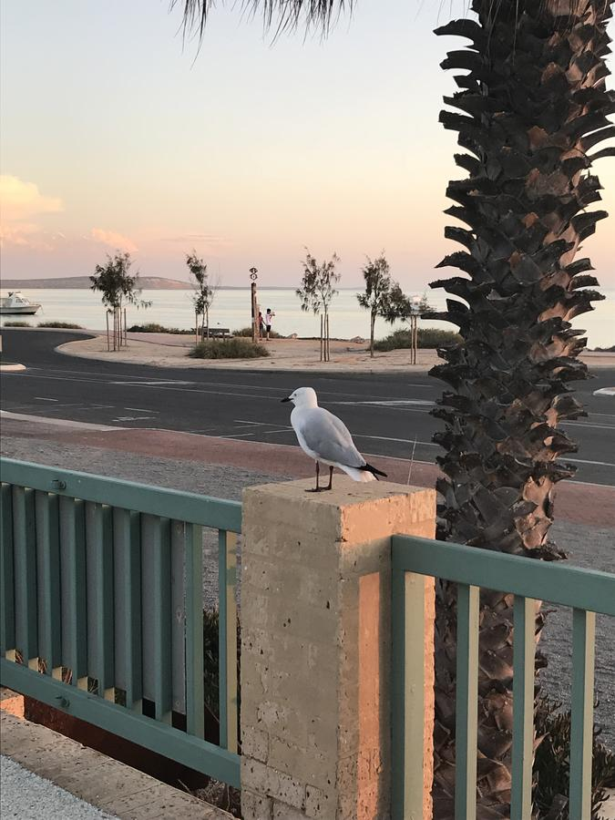 Shark Bay Seafront Apartments - Taree Accommodation